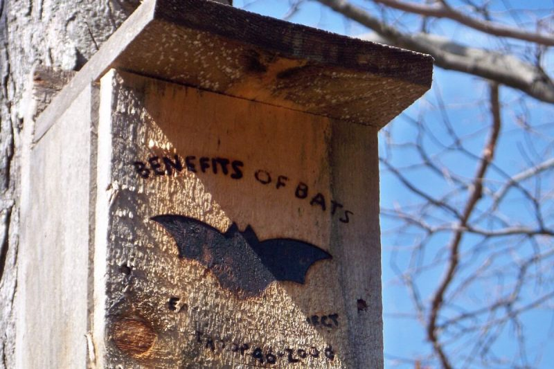 bat-house-near-me