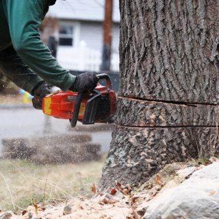 local tree removal companies near me