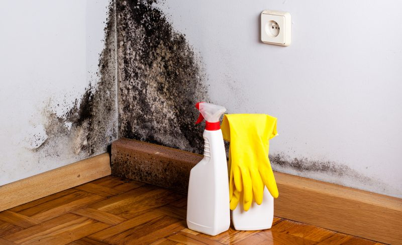 mold removal companies near me