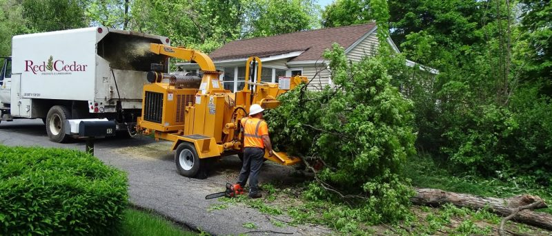 Beginners Overview to Tree Removal