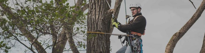 certified arborist test preparation course