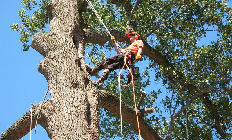 tree service near me free estimate